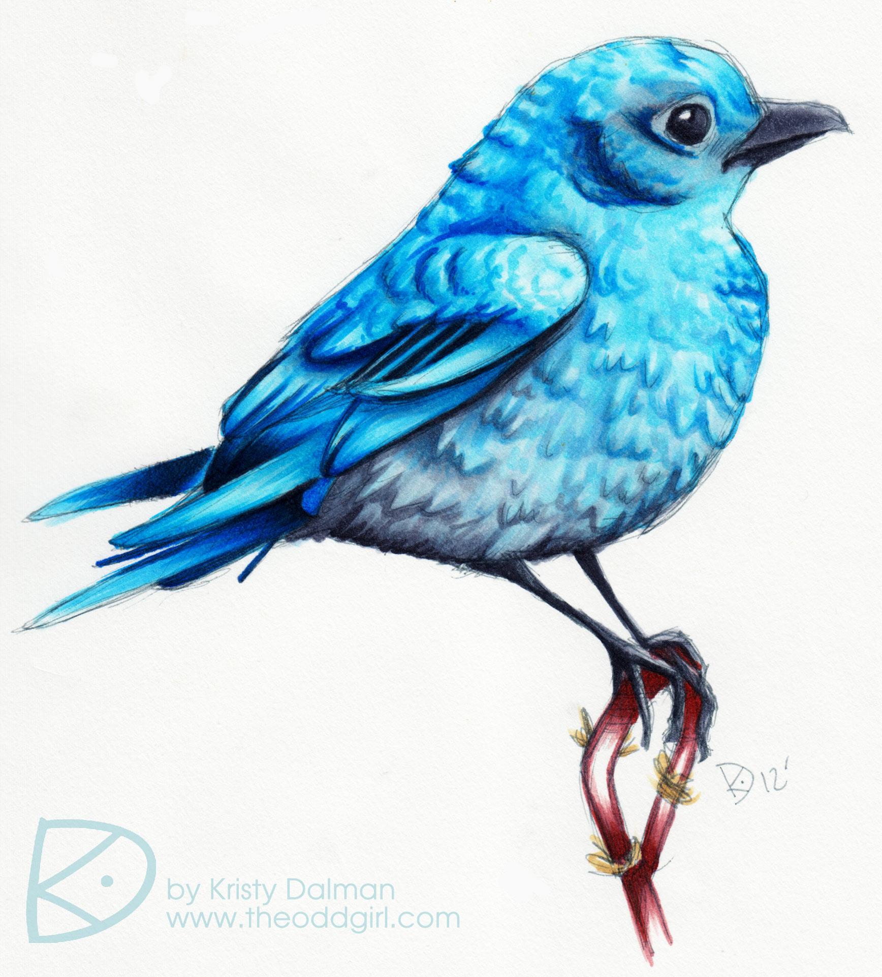 Blue Bird   Kristy Dalman